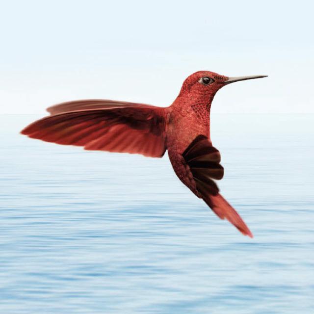 MOLT-Hummingbird