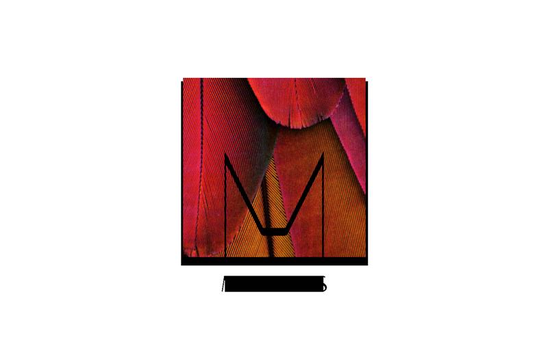 MOLT-Meet-Us